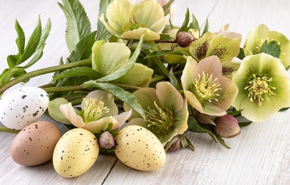 Картинка цветы, праздник, доски, яйца, Пасха, Easter, крашенки, морозник