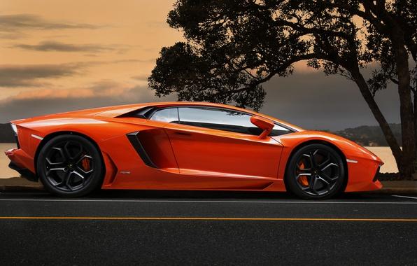 Картинка небо, оранжевый, дерево, Lamborghini, суперкар, supercar, sky, tree, orange, aventador, lp700-4, ламборгини, авентадор