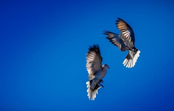 Фото обои птицы, небо, танец