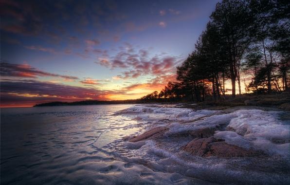 Картинка лед, зима, лес, деревья, озеро