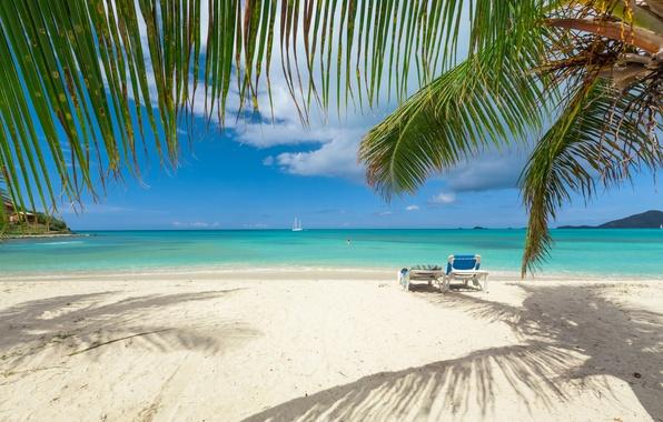Картинка песок, море, пляж, небо, солнце, облака, ветки, тропики, пальмы, побережье, яхта, горизонт, шезлонги