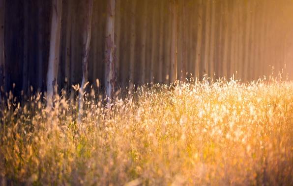 Картинка осень, лес, трава, свет