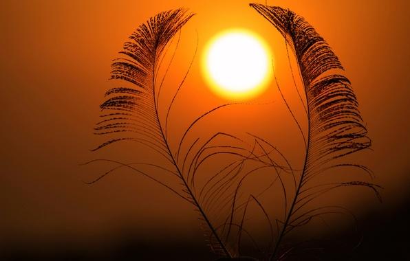 Картинка небо, солнце, перья