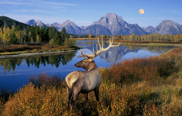 Картинка трава, деревья, пейзаж, горы, природа, озеро, река, луна, олень, рога