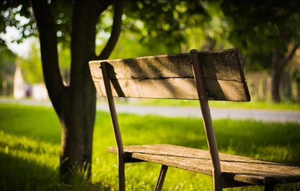 Картинка зелень, лето, листья, солнце, лучи, свет, деревья, скамейка, природа, фон, обои, тень, растения, день, лавочка, …