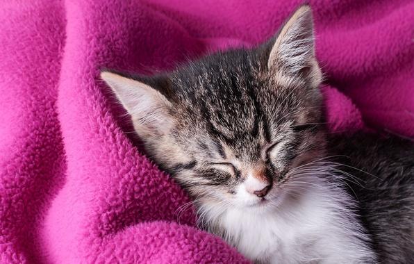 Картинка сон, плед, котёнок, спящий