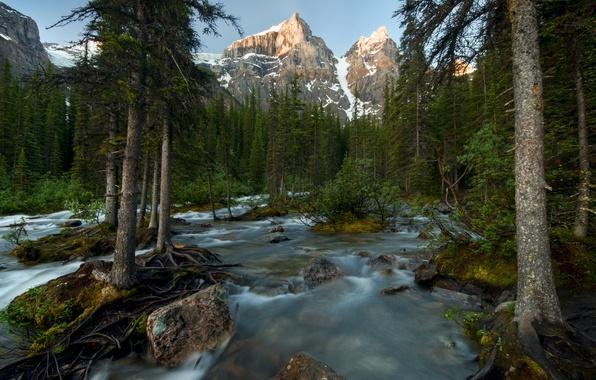 Картинка лес, деревья, горы, река, Канада, Banff National Park, Canada