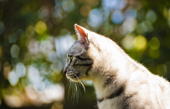 Картинка кошка, глаза, кот, усы, цвета, фото, фон, обои, яркие, шерсть, размытость, wallpapers, боке