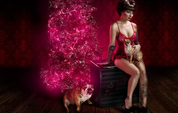 Картинка собаки, девушка, праздник, коробка, подарок, белье, новый год, рождество, ель, тату, бульдог, гирлянда