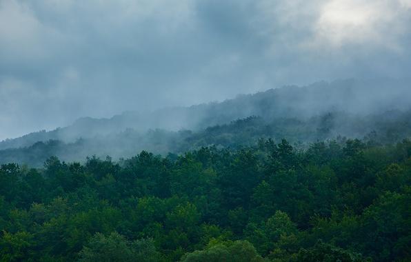 Картинка зелень, лес, облака, деревья, горы, синий, природа, зеленый, туман, green, холмы, утро, склон, холм, дымка, …