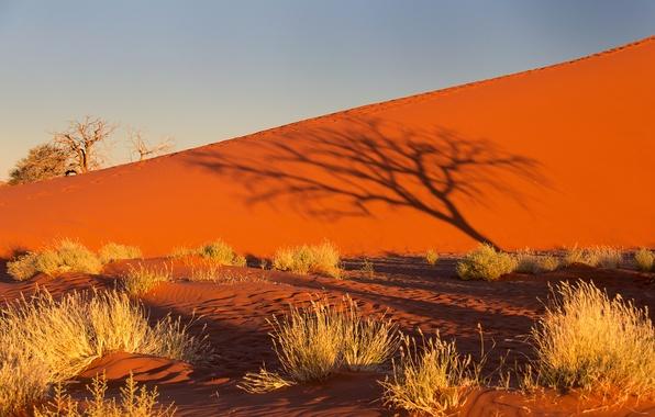 Картинка песок, небо, закат, дерево, куст, тень, бархан, Африка, Намибия, пустыня Намиб