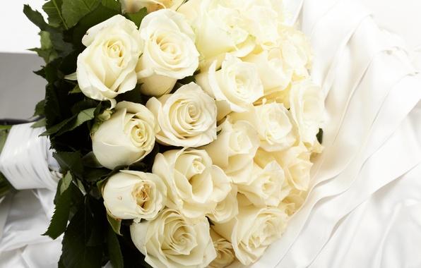 Картинка цветы, розы, букет, ткань, белые