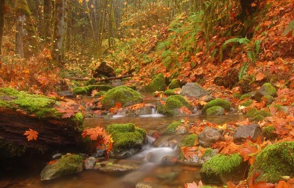 Картинка осень, лес, листья, деревья, природа, ручей, камни, речка, Пейзажи