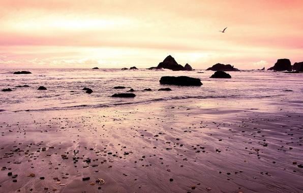 Картинка волны, камни, берег, чайка