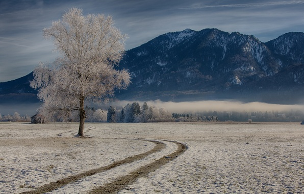 Картинка зима, горы, дерево, Германия, Бавария, Germany, Bavaria