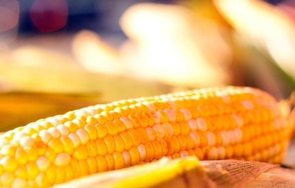 Картинка фон, widescreen, обои, еда, кукуруза, wallpaper, злаки, широкоформатные, background, полноэкранные, HD wallpapers, широкоэкранные, fullscreen