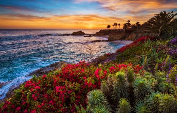 Картинка море, закат, цветы, тропики, пальмы, побережье, горизонт, кусты
