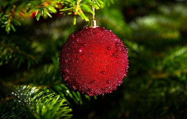 Картинка ветки, красный, игрушки, елка, шар, ель, шарик, Новый Год, Рождество, украшение, Christmas, праздники, New Year, …