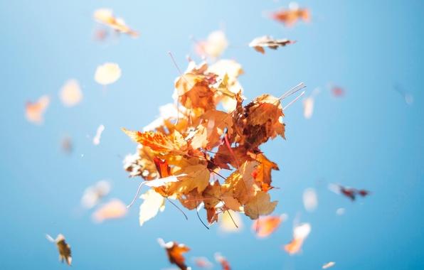 Картинка осень, небо, листва, вверх, охапка, листьев