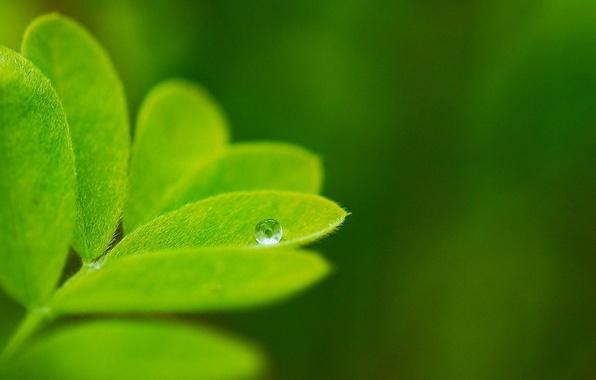 Картинка зелень, макро, природа, фон, обои, капля, растения, листик