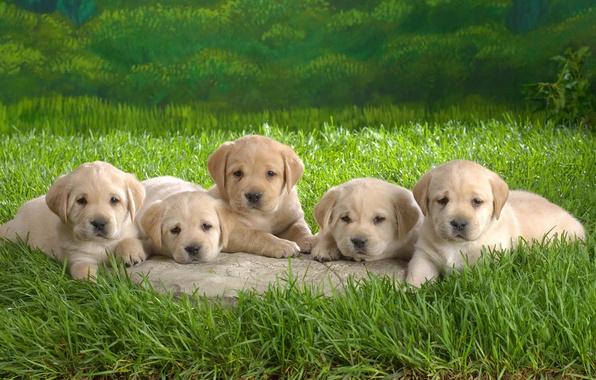 Картинка трава, щенки