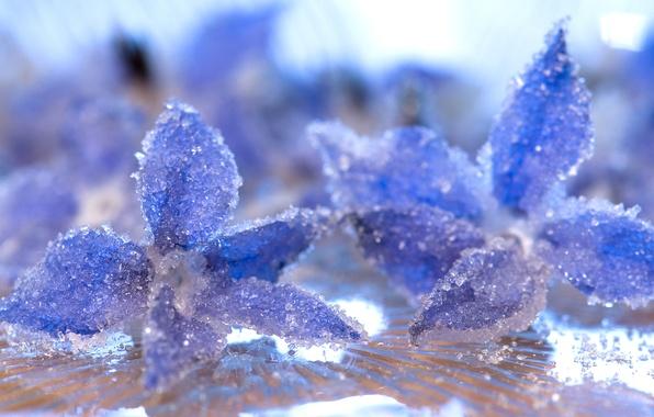 Картинка лед, вода, макро, лепестки, мороз, кристаллы