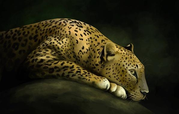 Картинка кошка, камень, хищник, арт, леопард, дикая