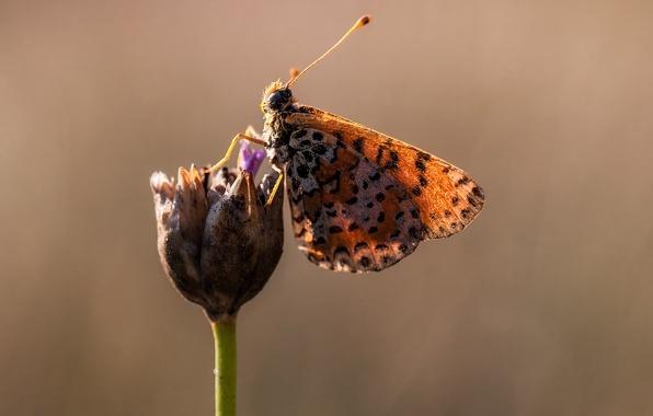 Картинка цветок, макро, бабочка, крылья, пятна, солнечно