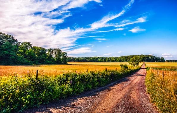 Картинка дорога, небо, облака, деревья, забор, поля, тень, фермы