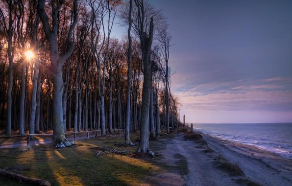 Картинка деревья, берег, утро