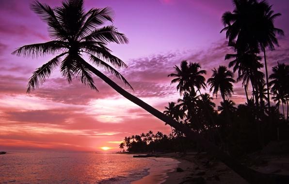 Картинка море, волны, пляж, небо, пейзаж, закат, пальмы, остров, силуэты