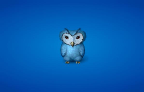 Картинка сова, птица, минимализм, синяя, owl, синеватый фон