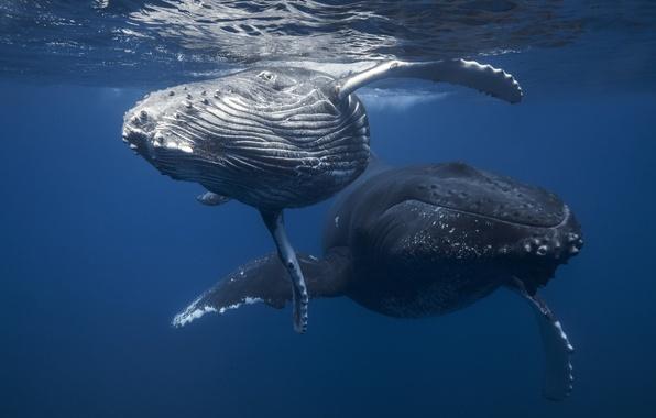 игры горбатые киты