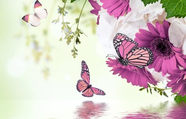 Картинка вода, бабочки, отражение, весна, цветение, water, blossom, flowers, spring, purple, butterflies, gerbera, refection