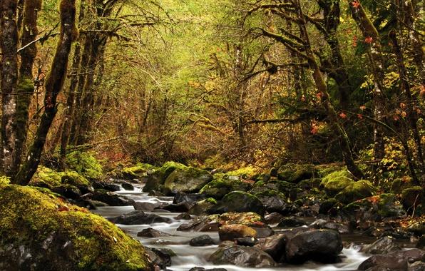 Картинка осень, лес, листья, деревья, ручей, камни, мох, США, Oregon, Detroit