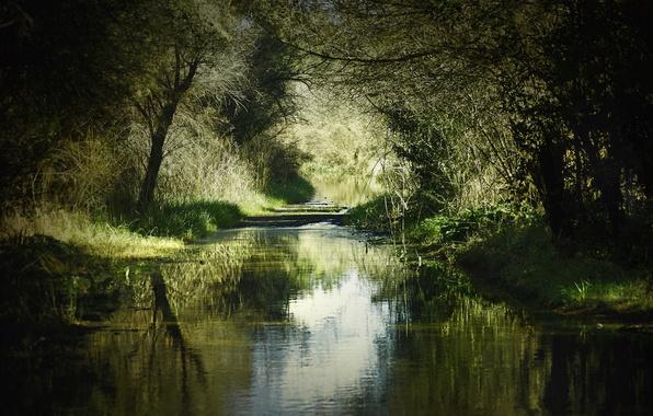 Картинка лето, трава, деревья, природа, река, тень, берега