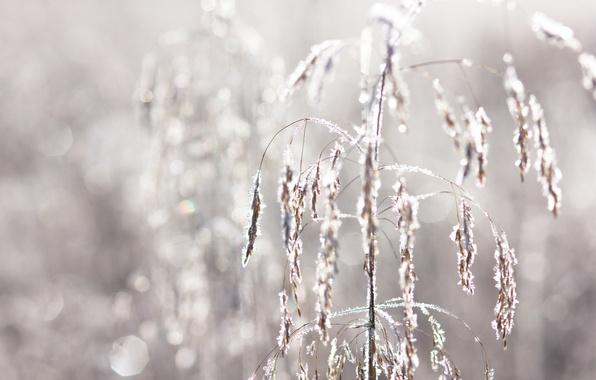 Картинка иней, осень, трава, утро, мороз