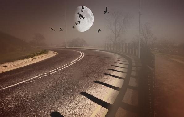 Картинка дорога, птицы, стиль, фон