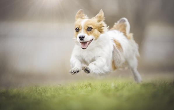 Картинка радость, настроение, собака, прогулка, боке