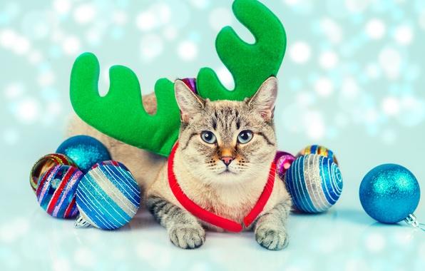 Картинка кошка, кот, шарики, игрушки, рожки