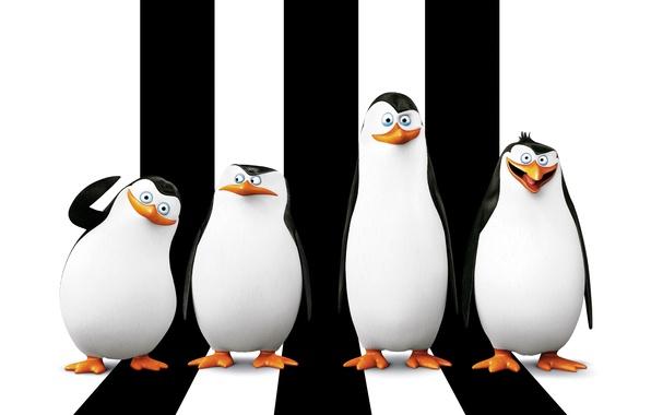 Картинка мультфильм, Рико, Skipper, Kowalski, Classified, Corporal, Penguins of Madagascar, Ковальски, Пингвины Мадагаскара, Прапор, Шкипер