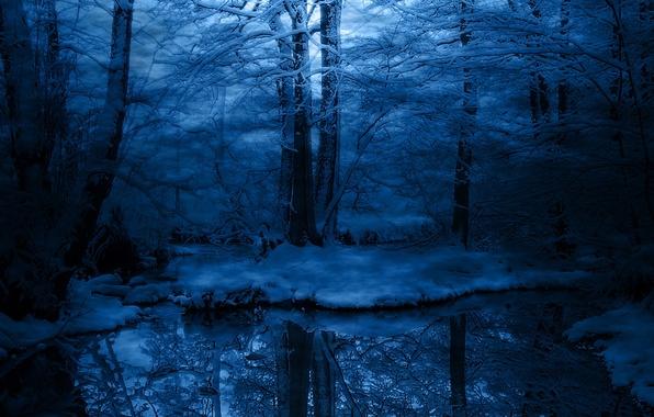 Зима деревья снег синий иней холод