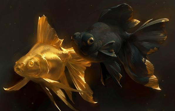 Картинка рыбка, арт, золотая рыбка, парочка, golden fish