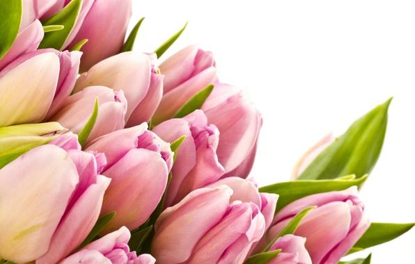 Картинка листья, цветы, красота, букет, лепестки, тюльпаны, розовые, pink, flowers, beauty, bouquet, bright, Tulips