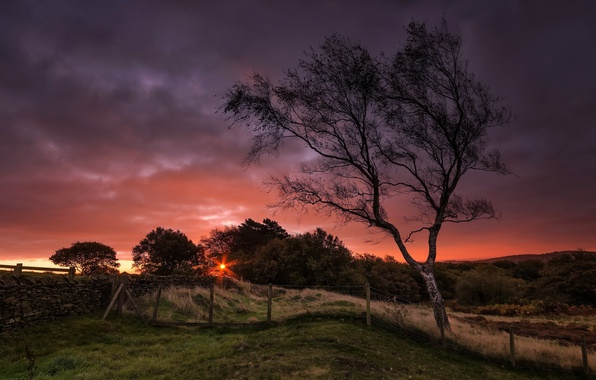 Картинка закат, ночь, дерево, забор