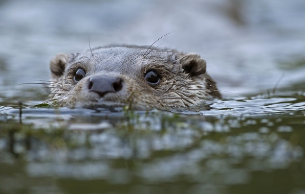 http://img1.goodfon.ru/wallpaper/big/7/38/animals-water-otter-zhivotnye.jpg