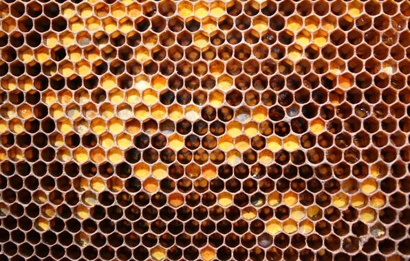 Картинка соты, мед, майский мед