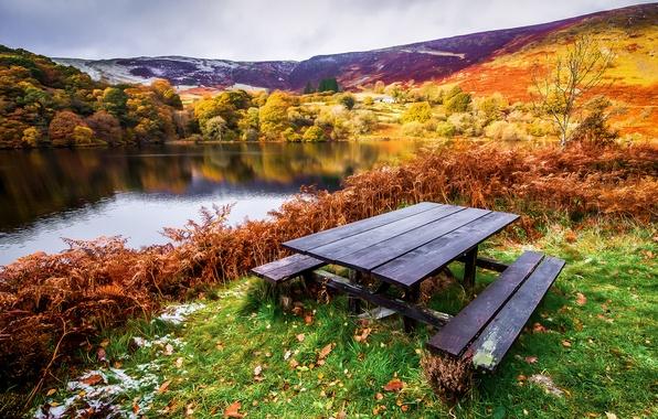 Картинка осень, трава, листья, деревья, пейзаж, река, стол, берег, лавочки