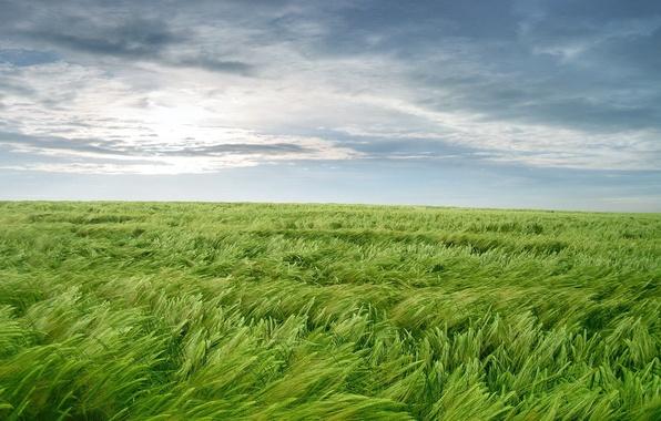 Фото обои обоя, ветер, трава, зелень