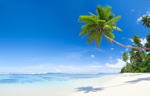 Лето солнце море пляж 34 фото